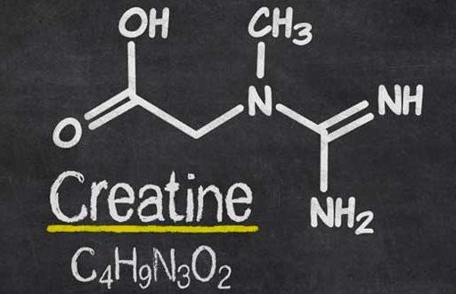 creatina nutricion