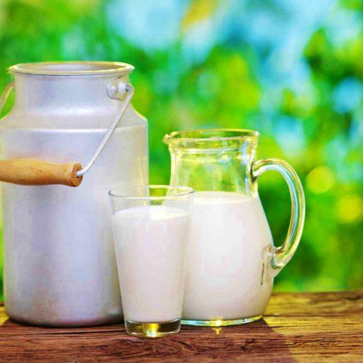 leche la nutricion